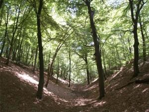 Het aquaduct naar de Hunnerberg was meer een reeks geulen. Sommige zijn nog te zien.