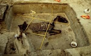 Eén van de paardengraven die bij Fort Ockenburgh werden gevonden.