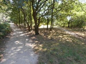 Het Kops Plateau bevat nu een park zodat je de locaties gemakkelijk bereiken kunt.